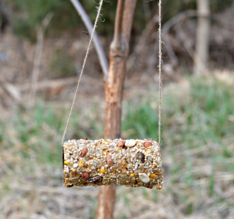 Toilet Paper Roll Craft Bird Feeder