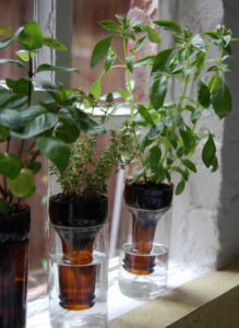 DIY Wine Bottle Herb Planter
