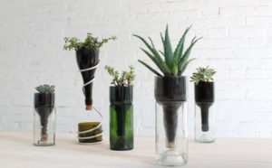 How to Make a Wine Bottle Planters