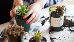 Wine Bottle Planter With Succulents