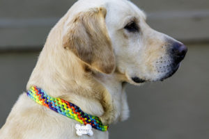 5 Color Paracord Dog Collar