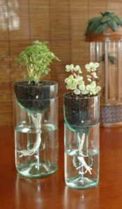 Wine Bottle Planter Ideas