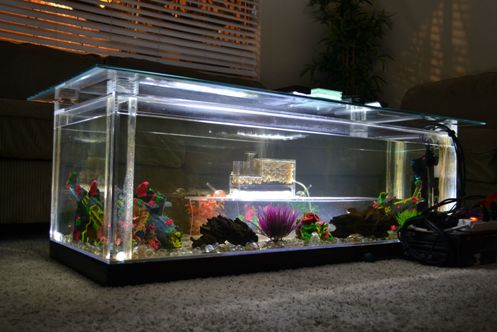 10 DIY Aquarium Fish Tank Coffee Table Designs Plans