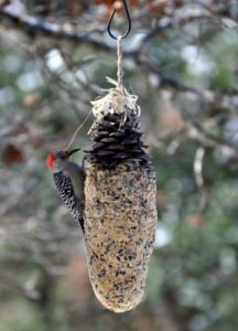 Giant Pine Cone Bird Feeder