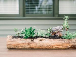 Log Planters for Succulents