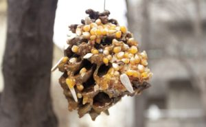 Pine Cone Bird Feeder Honey