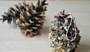 Pine Cone Bird Feeders Without Peanut Butter