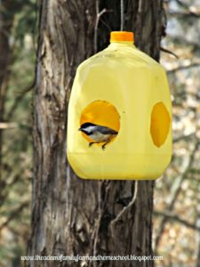 Bird Feeder from Milk Jug