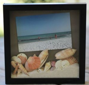 Seashell Shadow Display Box