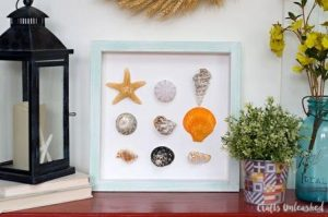 Shadow Box Seashells
