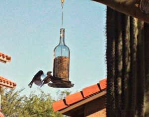 Easy Wine Bottle Bird Feeder