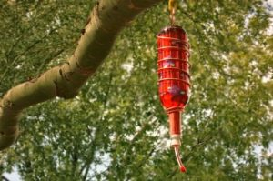 Wine Bottle Seed Feeder