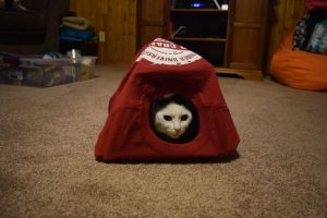 Cat Tent Outdoors