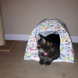 Cat Tent for Indoors