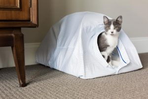 Pop Up Cat Tent