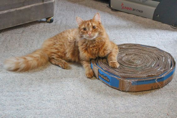 Corrugated Cardboard Cat Scratcher