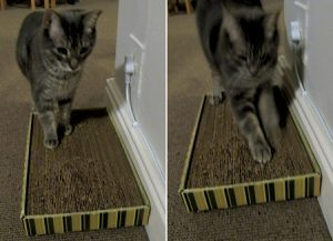 How to Make Cat Scratcher Out Of Cardboard